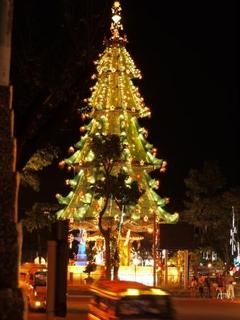 fuente tree night.jpg
